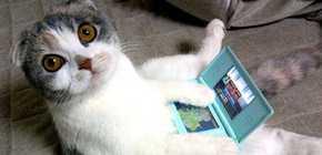 Nintendo DS - comment te dire adieu...
