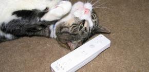 La Wii entre dans les ténèbres !