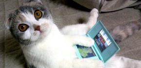 Gagnez une Nintendo DS avec Mylo and Chibi et le Joueur du Grenier !